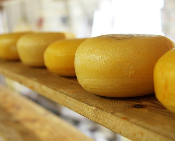 Vegane Alternative zu Käse