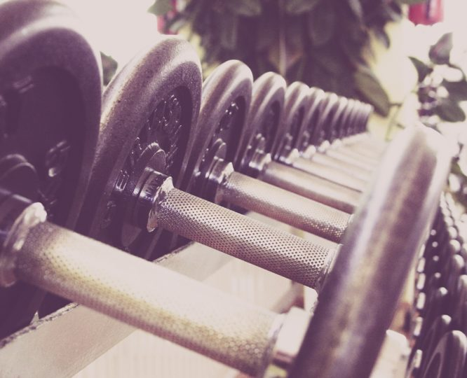 Vegane Ernährung und Muskelaufbau