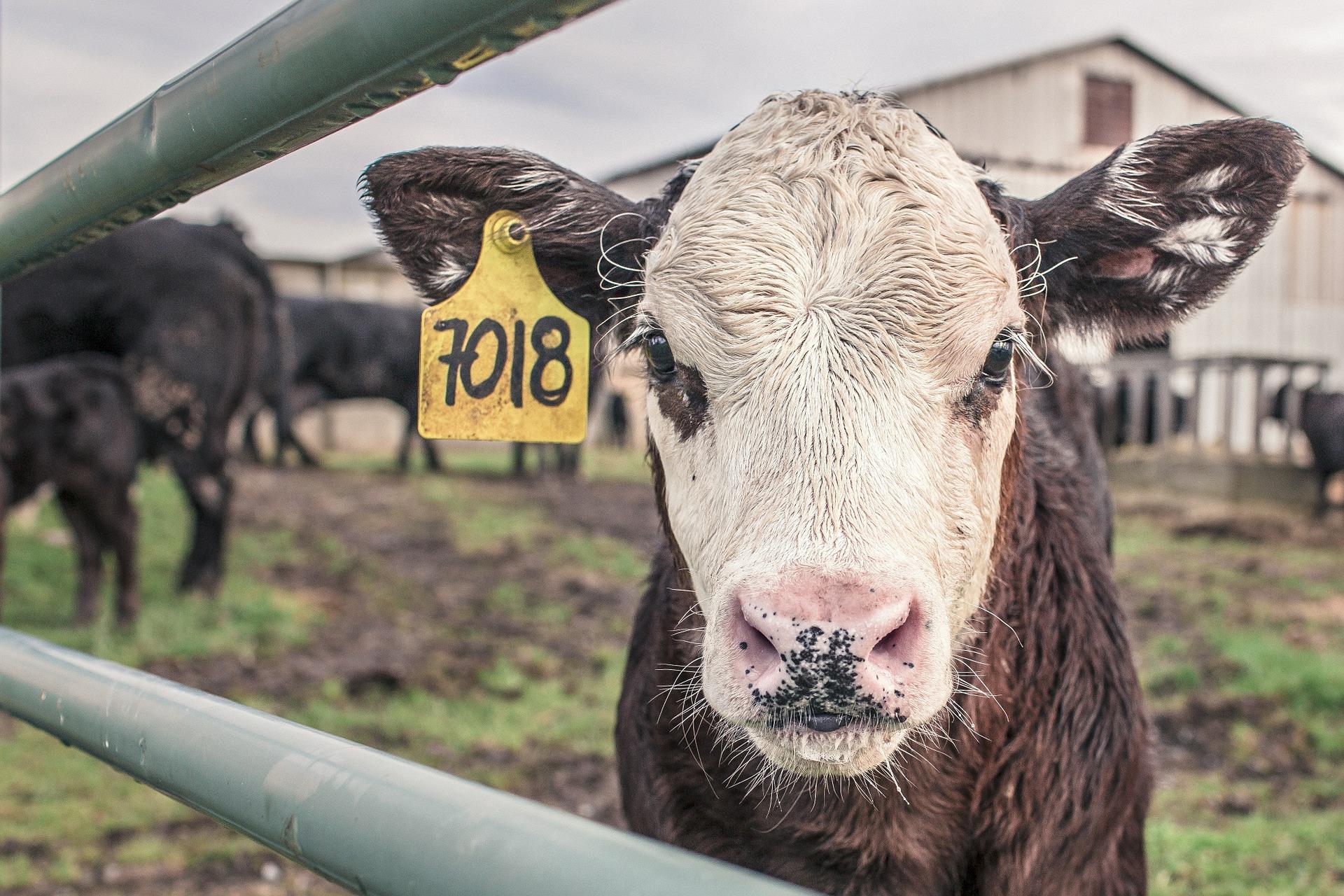 Vegan für den Tierschutz
