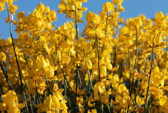 Fit in den Frühling mit pflanzlicher Ernährung
